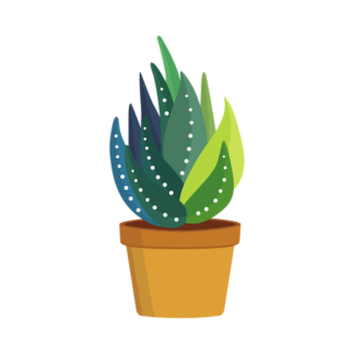 Organic Aloe Vera Drinks, Powders and Capsules
