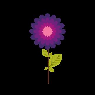 Organic Echinacea Extracts