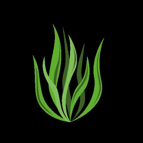 Organic Spirulina Capsules And Powders
